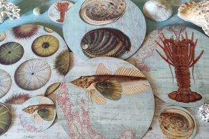 2020 New Zealand Coast Placemats and Coaster set by Tanya Wolfkamp. Four designs: kina, paua, crayfish, koura and kumukumu, gurnard